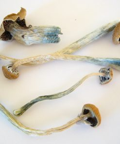 B+ magic mushrooms for sale