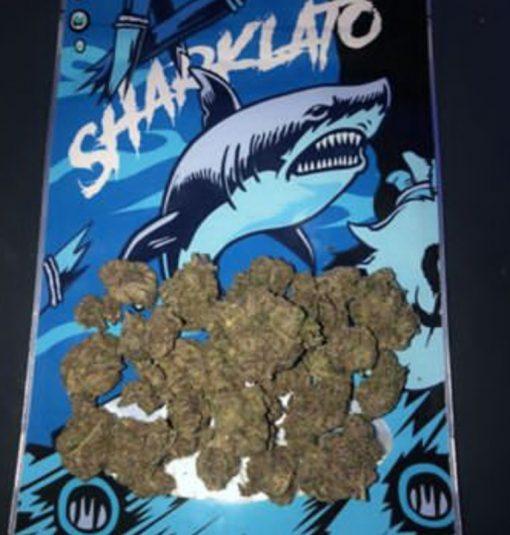 Buy Sharklato Exotic Strain