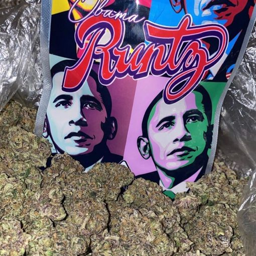 Buy Obama Runtz Online Obama Runtz for Sale Online Buy Runtz Weed Strain Online Obama Runtz Marijuana Strain